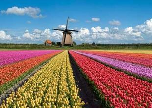 荷兰留学费用详细