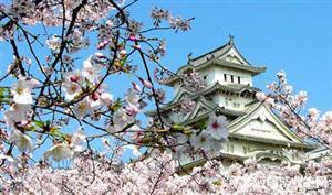 日本留学,读语言学校,你可以学到的不止语言