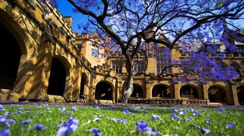 墨尔本大学预科学院Trinity重要更新