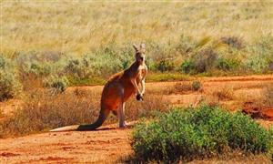 去澳大利亚留学费用多少才够用?